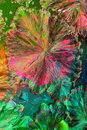 Colorful citric acid crystals Stock Photos