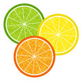Colorful citrus slices set of orange and lemon in grunge style for design vector eps Stock Photography