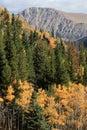 Colorful Colorado Autumn Scene Royalty Free Stock Photo