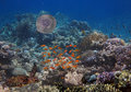 Colorful coral reef with many fishes and sea turtle Royalty Free Stock Photo