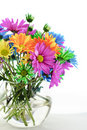 Colorful Daisies In A Vase Stock Images
