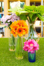 Colorful Daisy flower in vase Stock Photo