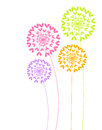 Colorful dandelion flowers vector illustration Royalty Free Stock Photo
