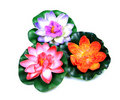 Colorful decoration flowers Stock Image