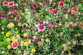 Colorful decorative flowers on summer meadow the Royalty Free Stock Image