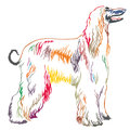Colorful decorative standing portrait of Afghan greyhound vector
