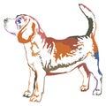 Colorful decorative standing portrait of beagle vector illustrat
