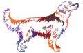 Colorful decorative standing portrait of dog golden retriever