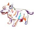 Colorful decorative standing portrait of dog Norwich terrier