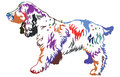 Colorful decorative standing portrait of dog Russian Spaniel