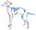 Colorful decorative standing portrait of Italian Greyhound vecto