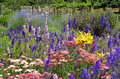 Colorful delphinium and lily garden summer flower Royalty Free Stock Images