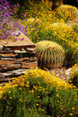 Colorful desert garden Royalty Free Stock Images