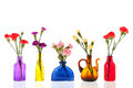Colorful dianthus in little glass vases isolated over white background Stock Images
