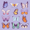 Colorful different summer colorfull butterfly wings vector top view illustration isolated on background.