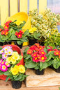 Colorful display of fresh flowers at the market Stock Photos