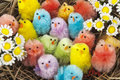 Colorful easter chickens flowers Stock Photo