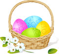Colorful easter eggs in basket with spring flower  Royalty Free Stock Photo