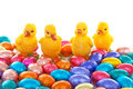 Colorful easter eggs chickens over white background Stock Photos