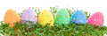 Colorful easter eggs garden cress over white background Stock Images
