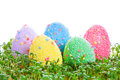 Colorful easter eggs garden cress over white background Stock Image