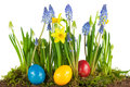 Colorful Easter eggs with spring flowers Royalty Free Stock Photo