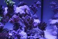 Colorful and exotic aquarium with corals Royalty Free Stock Image