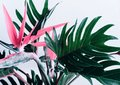 Colorful of Exotic tropical flower strelizia and xanadu leaves