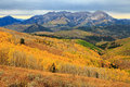 Colorful fall aspens in the Utah mountains. Royalty Free Stock Photo
