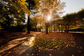 Colorful fall autumn park Stock Photography