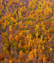 Colorful fall foliage on hillside Royalty Free Stock Photography