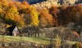 Colorful fall landscape autumn with trees in a rustique atmosphere Stock Photo