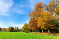 Colorful fall landscape with trees sky and meadow Royalty Free Stock Photo