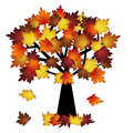 Colorful Fall Leaves on Tree