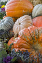 Colorful fall pumpkin Stock Image