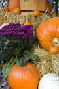 Colorful fall pumpkin Royalty Free Stock Photography