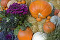 Colorful fall pumpkins and flowers Stock Images