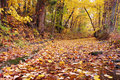 Colorful Fall Trees Leaves and Creek Bed Royalty Free Stock Photo