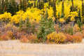 Colorful fall yukon canada boreal forest taiga golden yellow autumn tree vegetation territory Royalty Free Stock Photos