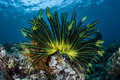 Colorful Feather Star Royalty Free Stock Photo