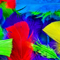 Colorful feathers background Stock Photos