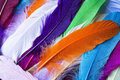 Colorful feathers Royalty Free Stock Photo
