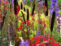 Colorful herbal meadow detail Royalty Free Stock Photo