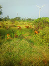 Colorful filming modern rustic idyll pastoral in India Wind farm Royalty Free Stock Photo