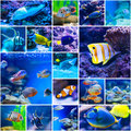 Colorful fish in aquarium saltwater world Royalty Free Stock Photo