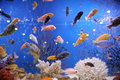 Colorful fish in big aquarium Stock Photos