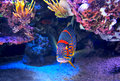 Colorful fish on the bottom exotic among rocks with corals in famous aquarium of monaco Royalty Free Stock Photo