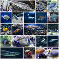 Colorful fish collage a about underwater world Royalty Free Stock Photography