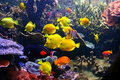 Colorful fish and coral Stock Photo