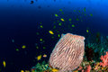 Colorful fish and corals on a deep reef sponges an underwater tropical coral Stock Photos